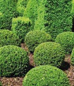 Arbusti | Le piante e i fiori di Fabbri Vivai