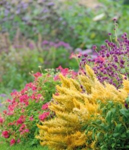 Erbacee Perenni | Le piante e i fiori di Fabbri Vivai