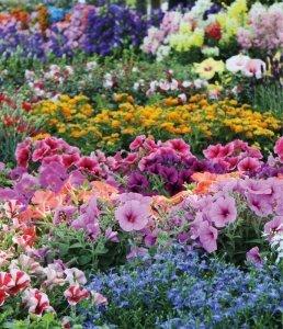 Fiori | Le piante e i fiori di Fabbri Vivai