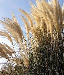 Graminacee | Le piante e i fiori di Fabbri Vivai