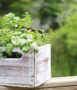 Piante Aromatiche | Le piante e i fiori di Fabbri Vivai
