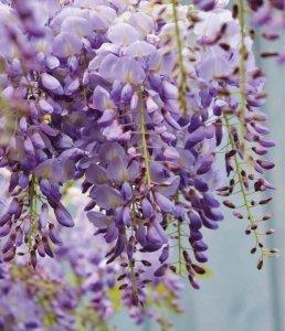 Piante e Rampicanti | Le piante e i fiori di Fabbri Vivai