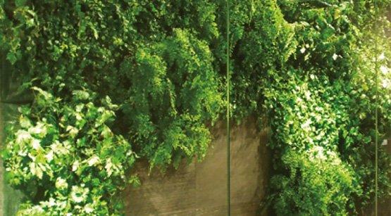 Verde Pensile E Verde Verticale | Fabbri Vivai Arezzo, Siena, Perugia Firenze