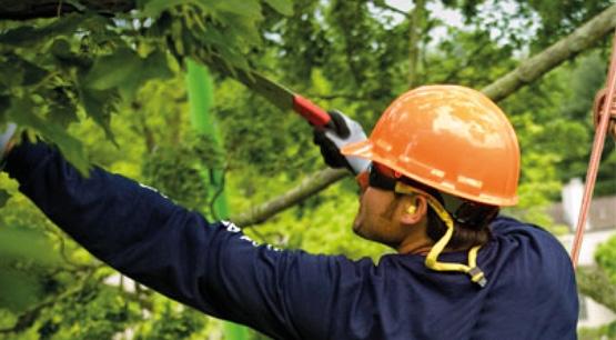 Potatura Alberi E Tree Climbing - Fabbri Vivai Cura e Progettazione Aree Verdi ad Arezzo, Siena, Perugia e Firenze