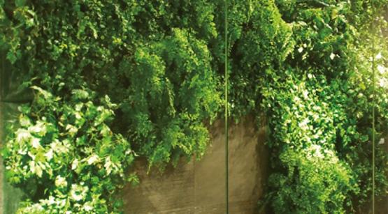 Verde Pensile E Verde Verticale - Fabbri Vivai Cura e Progettazione Aree Verdi ad Arezzo, Siena, Perugia e Firenze